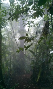 Costa Rica - Cloud Forest
