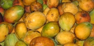 Mangos in Season